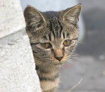 cat0108-0666_m.jpg